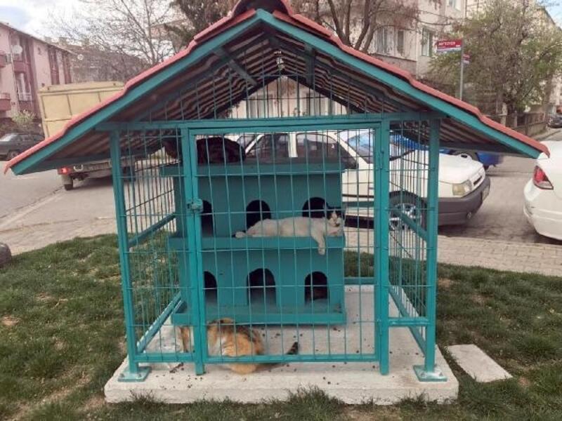 Lüleburgaz'ın parklarına kedi evleri konuluyor