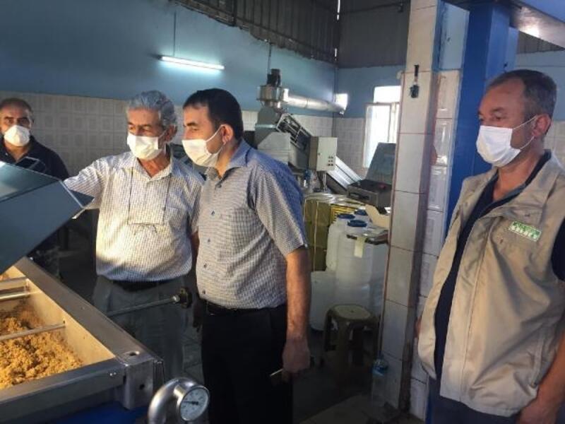 Osmaniye'de 19 bin ton salamuralık zeytin rekoltesi bekleniyor