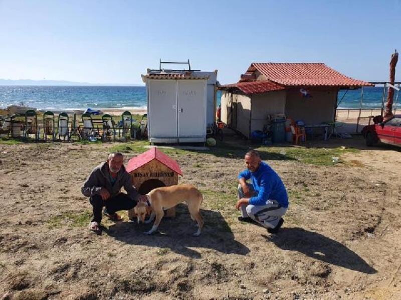 Belediye barınağından köpek sahiplenene 'köpek evi' hediye