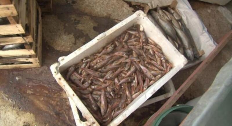 Tuzla'da yaklaşık 1 ton çürümüş balık yakalandı