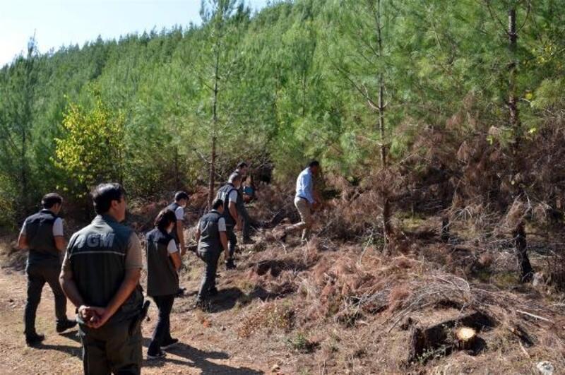 Ormancılık faaliyetleri incelendi