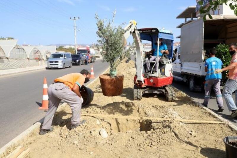 Payallar'daki refüjde bitkilendirme çalışmaları