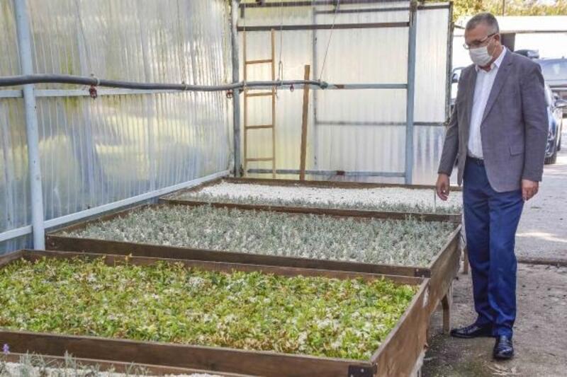 Karacabey'de kent ekonomisine katkı sağlayacak ürünler yetiştiriliyor