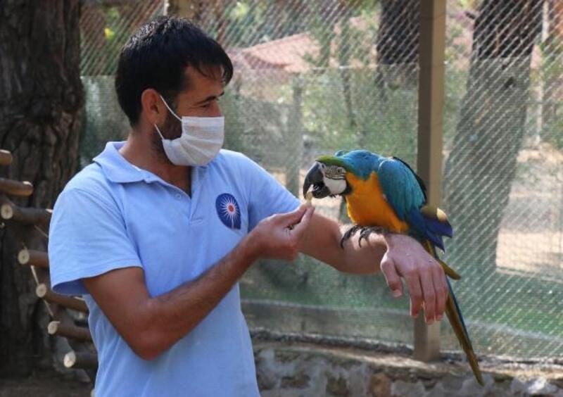 Aşuk ile Maşuk, Hayvanat Bahçesi'nde yeni yuvasında