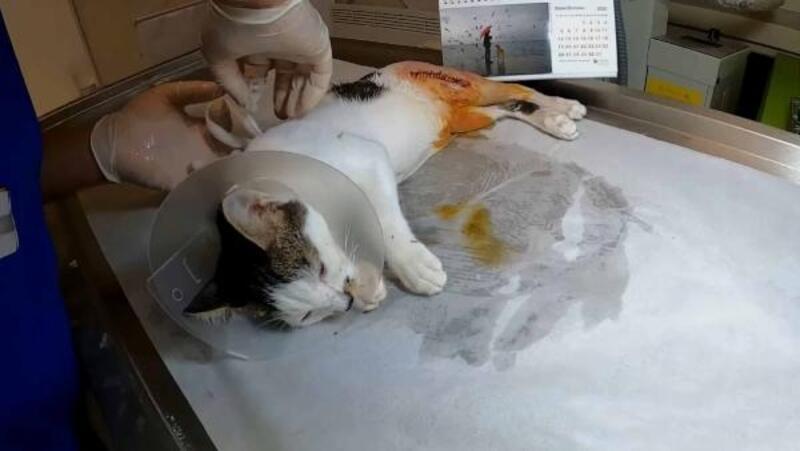 Pamuk'un kırılan bacağı tedavi edildi