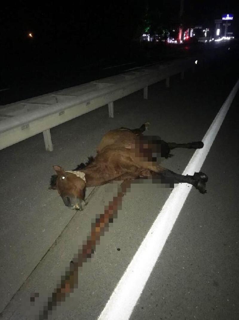 Yolcu otobüsünün çarptığı başıboş at öldü