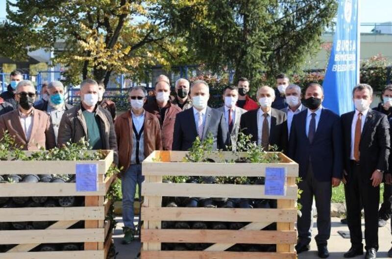 Bursa Büyükşehir Belediyesi'nden çiftçiye yaban mersini fidanı desteği