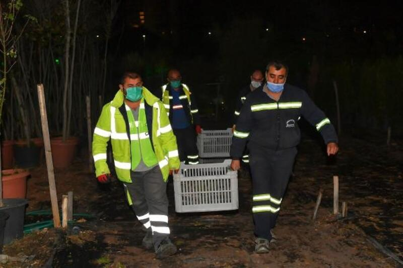 Ankara'dan Hatay'a 32 bin çam fidanı gönderildi