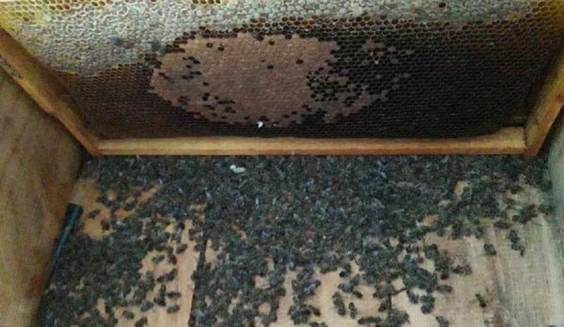Kovandaki arıların zehirlendiği iddiası