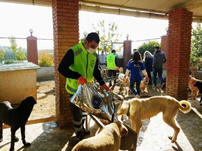 Bursa Büyükşehir Belediyesi İzmir'deki depremden etkilenen hayvanları unutmadı