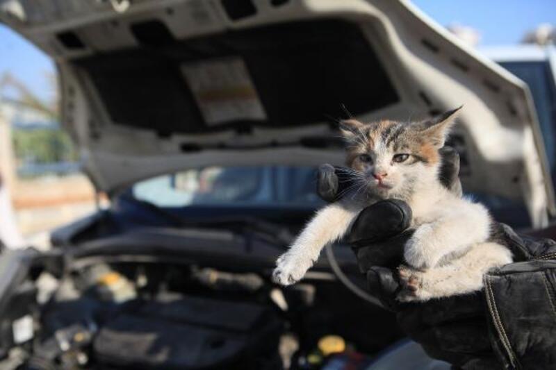 Isınmak için araba motoruna giren can dostları itfaiye ekipleri kurtarıyor