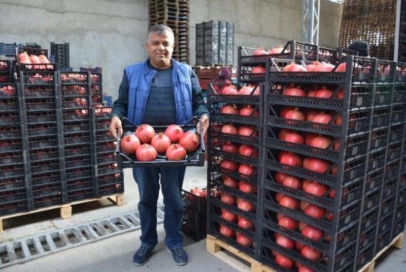 Korkuteli'den nar ihracatı