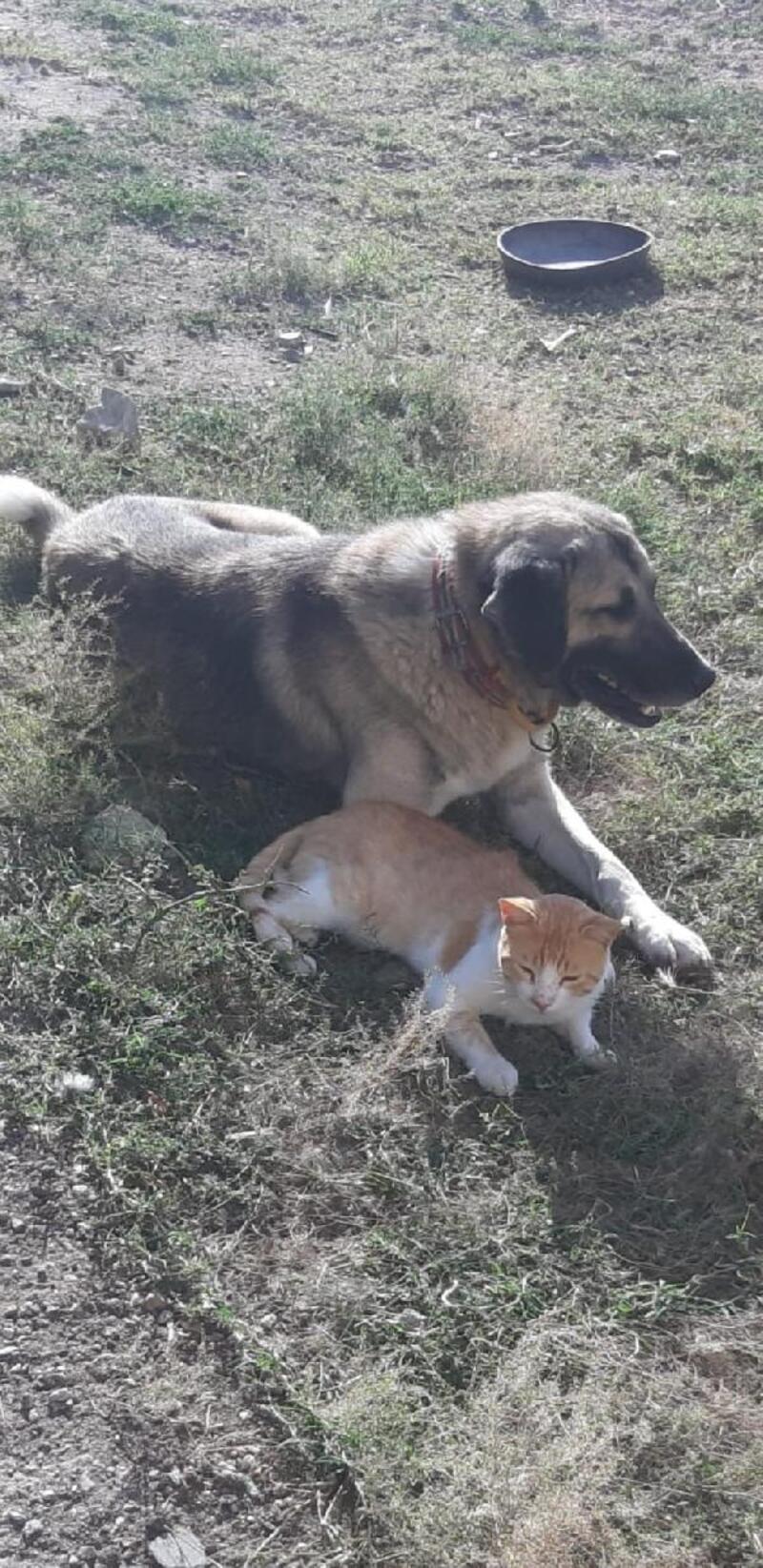 Kediler ile köpeklerin dostluğu yüzleri gülümsetti