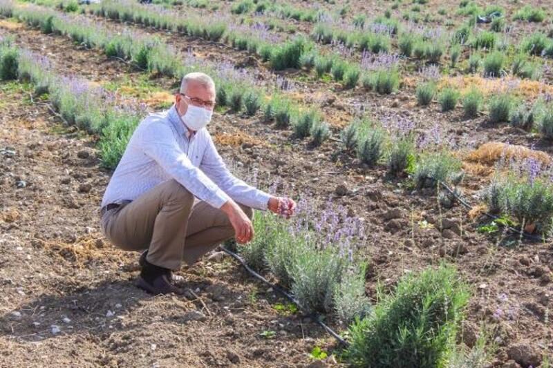 Karacabey Belediyesi aromatik bitkiler üzerine çalışıyor