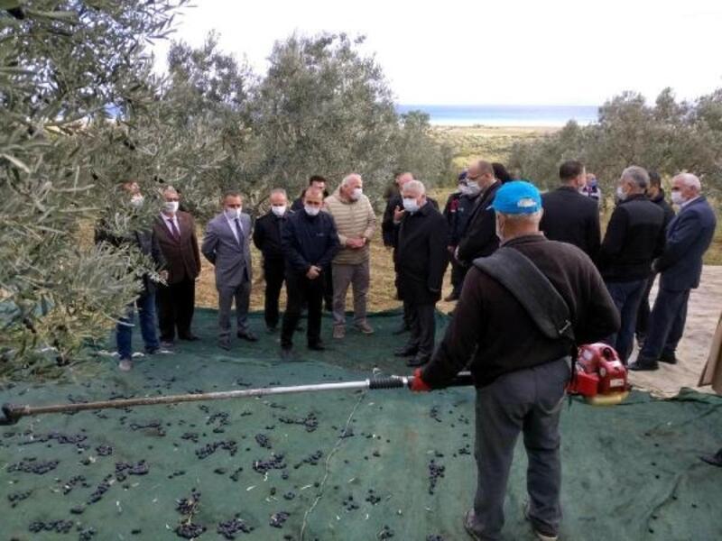 Vali Yıldırım, Şarköy'de zeytin hasadına katıldı