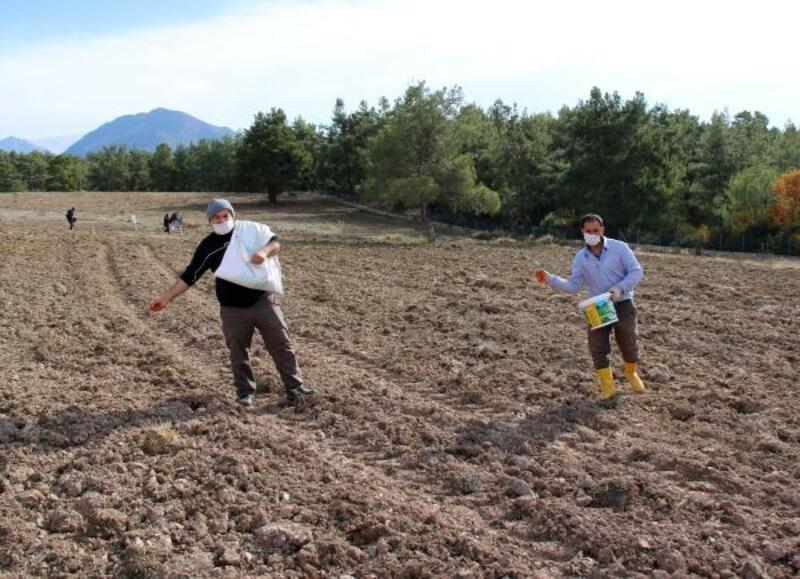Büyükşehir'den Gündoğmuşlu çiftçilere tohum desteği