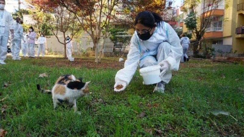 Yenişehir Belediyesi, sokak hayvanlarını yalnız bırakmadı