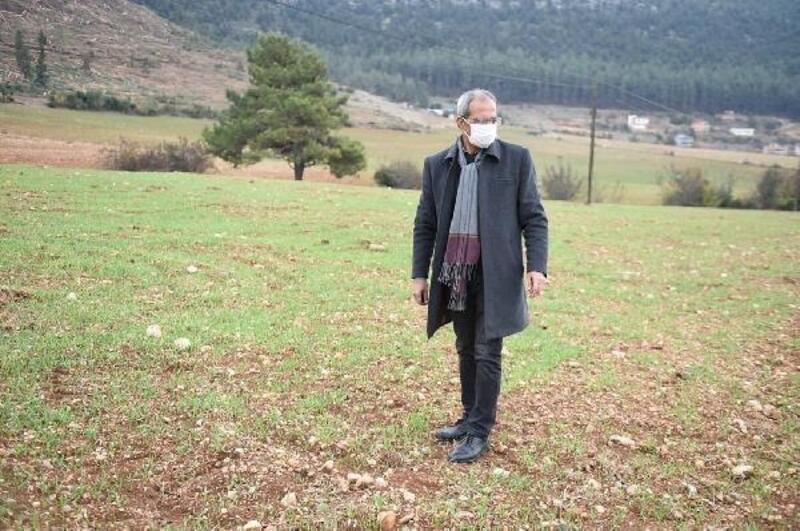 Köylülerle birlikte ekilen kunduru buğdayı çimlendi
