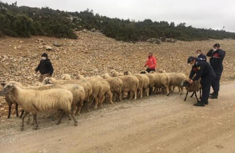 Çalınan koyunları JASAT buldu