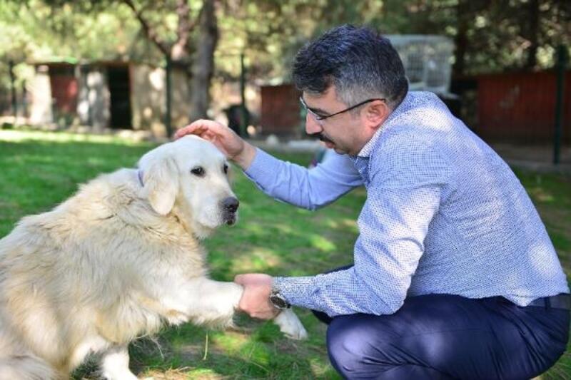 Yıldırım Belediyesi sokak hayvanlarına yardım ediyor