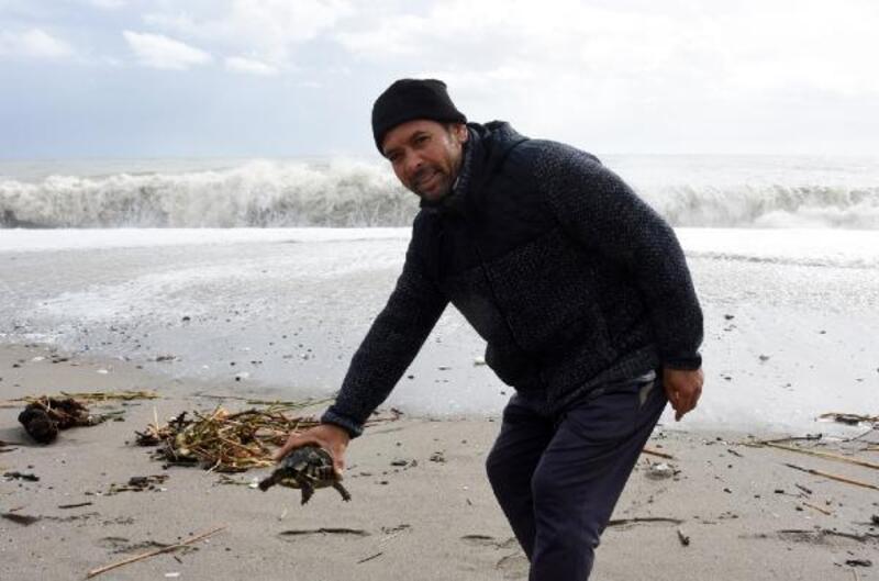 Kaplumbağaları dalgalar arasından kurtardılar