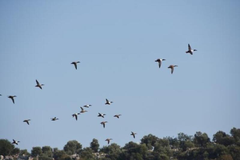 Kuş Cenneti'nde göçmen kuşların şöleni