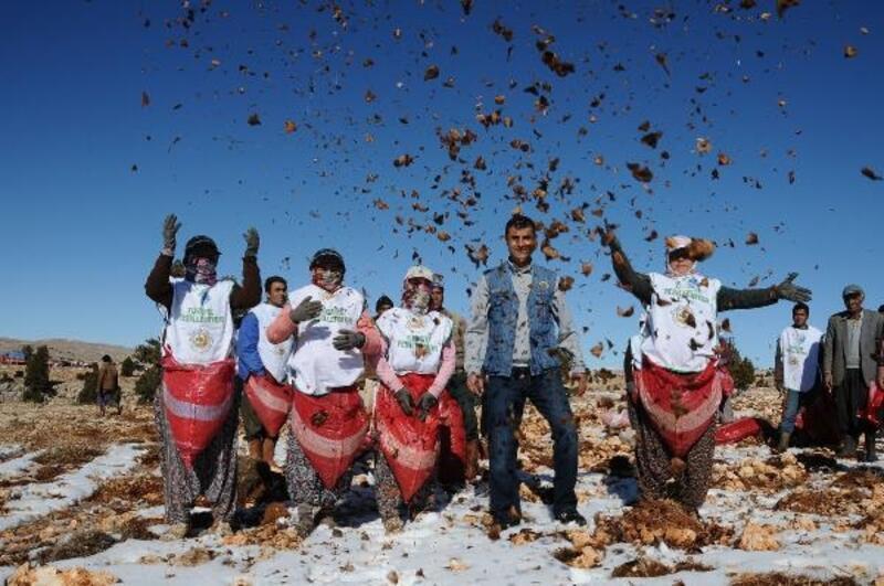 '200 ton karpelli sedir tohum ekimi yapılması hedefleniyor'