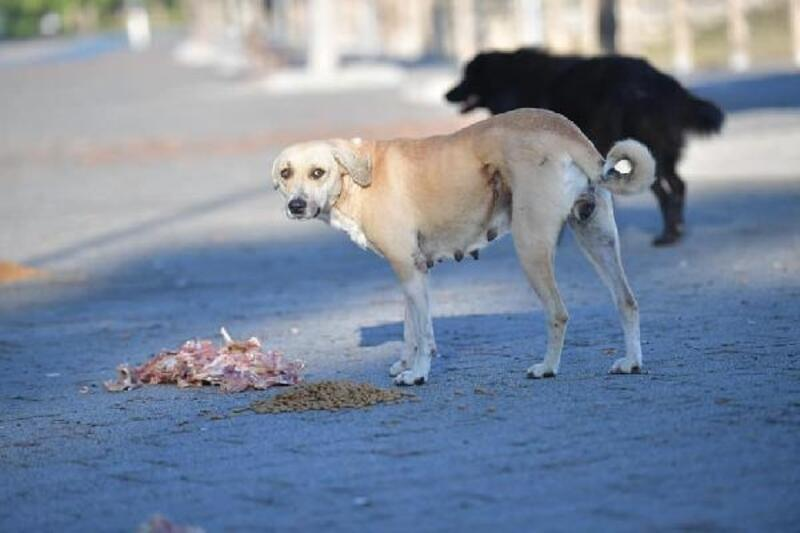 Çukurova'da sokak hayvanları kaderine terkedilmiyor