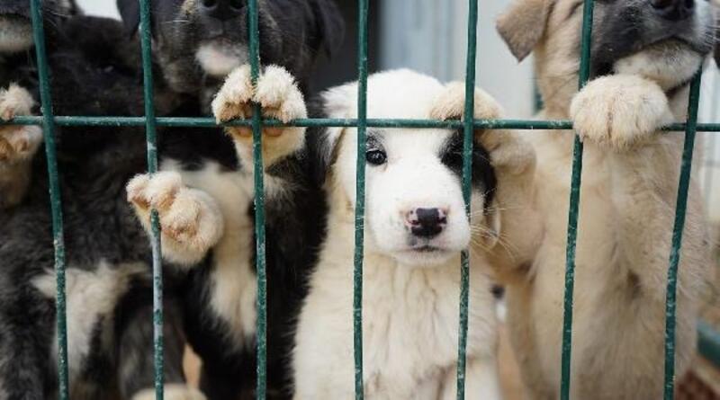 Lüleburgaz'da 138 sokak hayvanı sahiplendirildi