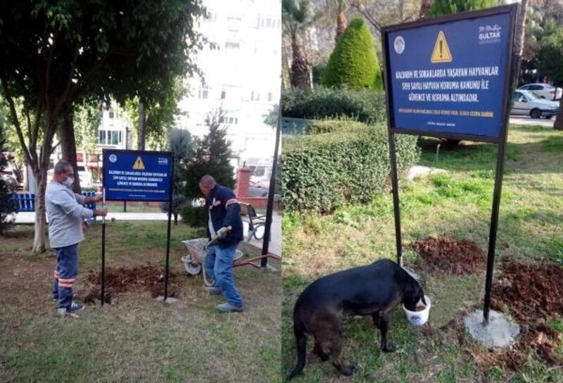 Sokak hayvanları, Akdeniz Belediyesi'nin koruması altında