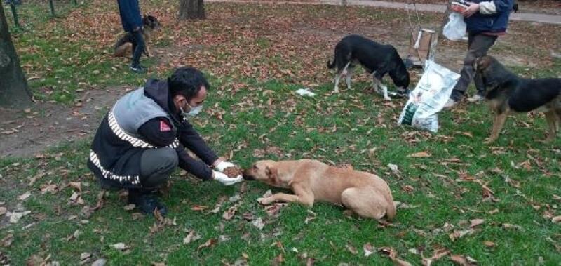 Osmangazi Belediyesi, Uludağ yolundaki sokak hayvanlarını unutmadı