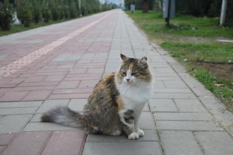 Alanya'da sokaklar hayvanlara kaldı