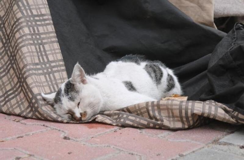 Otomobilin çarptığı yavru kedi öldü