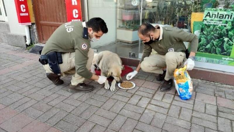 Osmaniye'de polis, kısıtlamada sokak hayvanlarını besledi