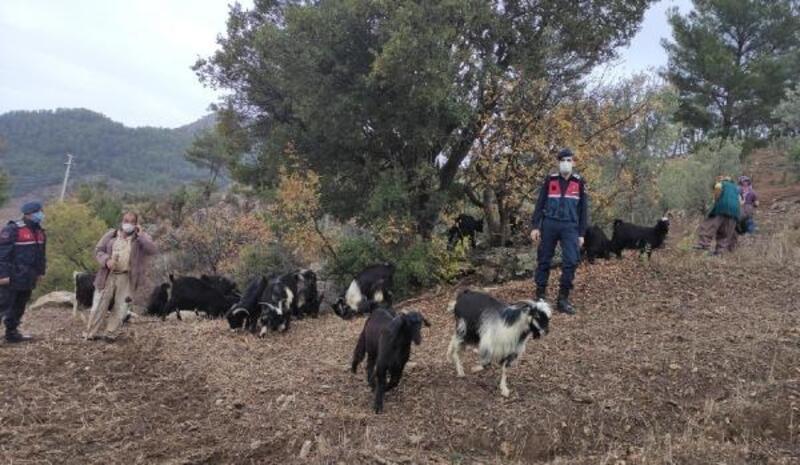 Kayıp hayvanları jandarma buldu