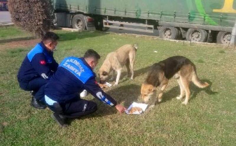 Sokağa çıkma yasağında, hayvanlar unutulmadı