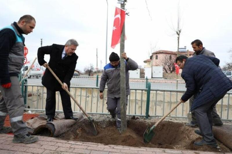 Melikgazi Belediyesi, 1 yıl da 70 bin ağacı toprakla buluşturdu