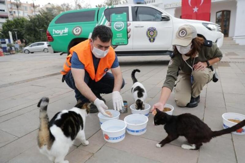Büyükşehir ve Emniyet sokak hayvanlarını besledi