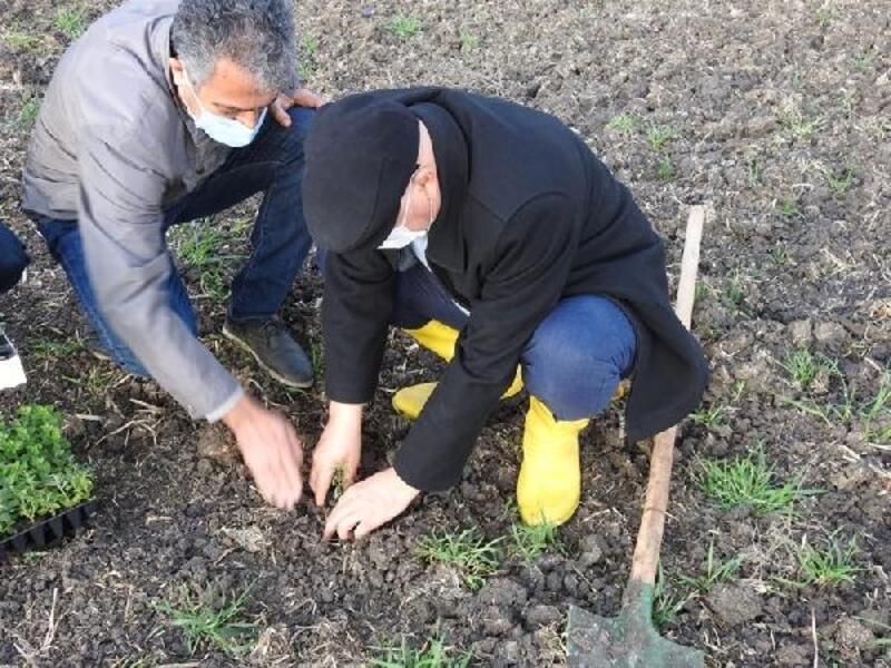 Lüleburgaz'da böğürtlen ve çilek ekim eğitimi gerçekleştirildi