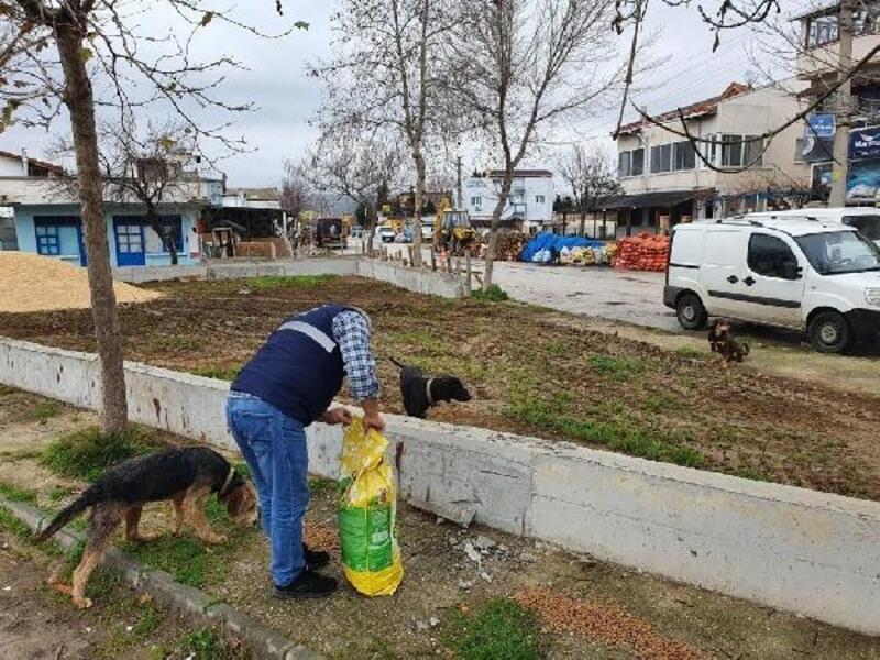 Kısıtlamada Saros'taki sokak hayvanları unutulmadı