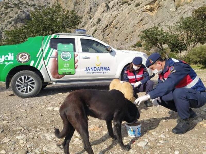 Mersin'de Jandarma Çevre, Doğa ve Hayvanları Koruma Timi göreve başladı
