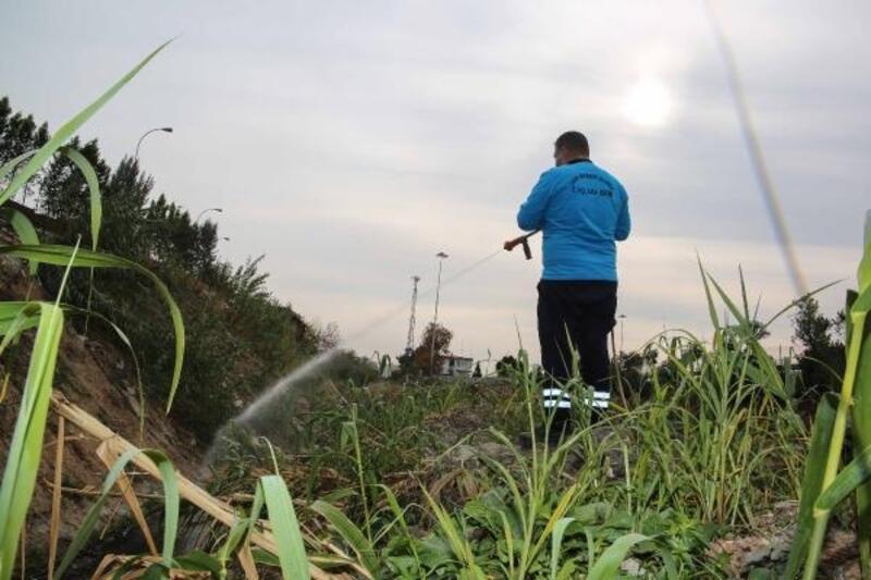 Büyükşehir, sivrisinek ve haşereye karşı ilaçlama yapıyor