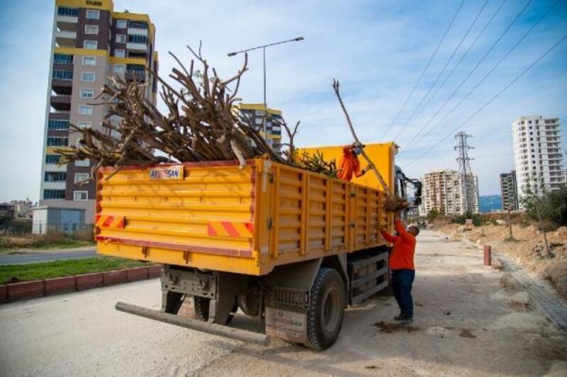 Büyükşehir, 26'ncı Cadde'deki ağaçları koruma altına aldı
