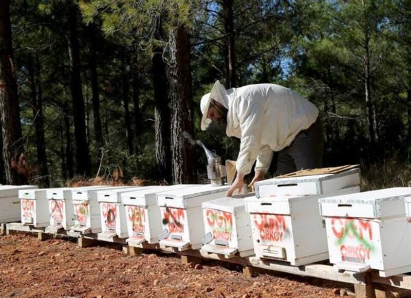OGM'den orman köylüsüne 250 milyon TL destek
