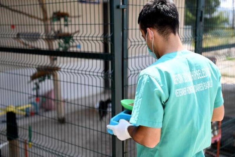 Kaşlı Geçici Hayvan Bakımevi salı günleri ziyarete kapanacak