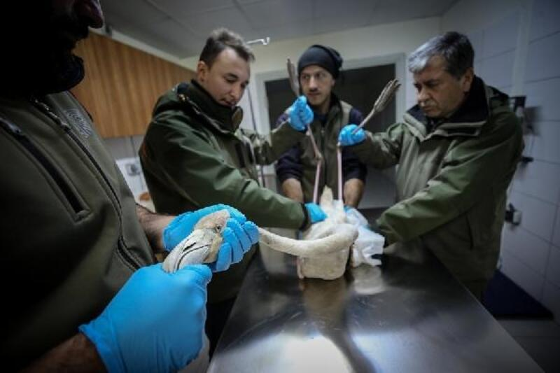 Bursa'da 2020 yılında 314 yaban hayvanı tedavi edilip doğaya salındı
