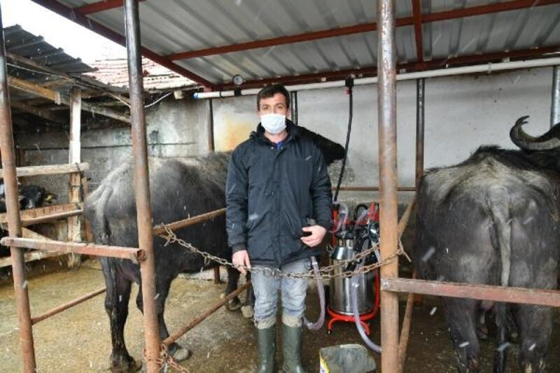 Samsun'da Manda Islah Projesi üretimi artırdı