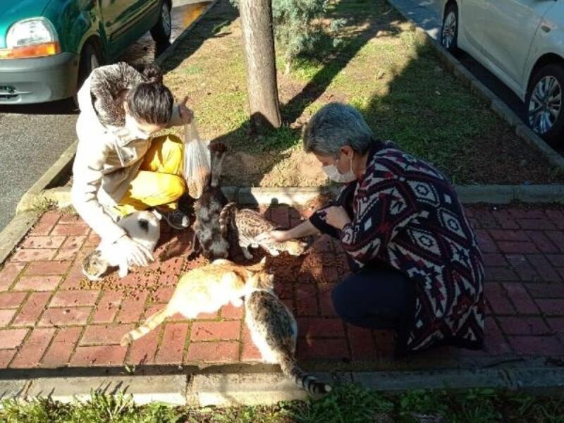 İzmir'in 30 ilçesinde sokak hayvanlarına mama
