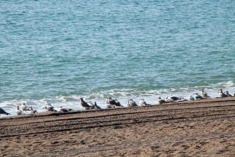Sahil martılara kaldı