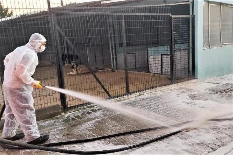 Süleymanpaşa Belediyesi, Geçici Hayvan Bakımevi'ni dezenfekte ediyor